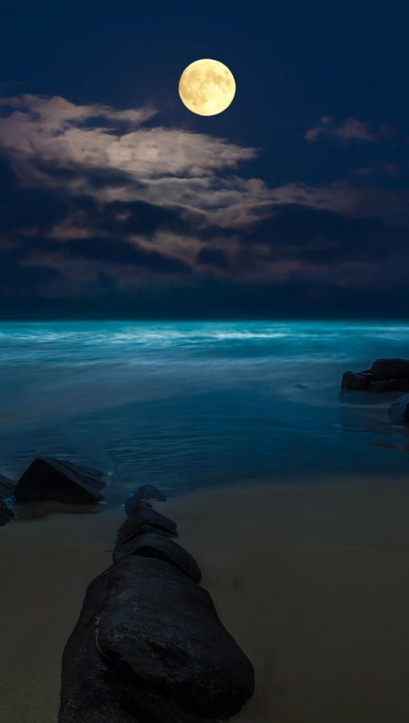 """""""Don't even try to talk to me when I'm watching the moon. That's my moon, baby."""" —Wendelin Van Draanen"""