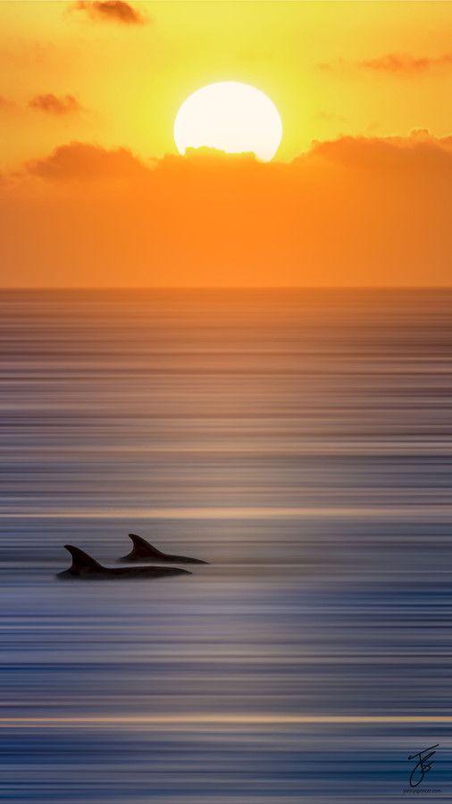 Ocean, gorgeous, amazingview, sunset, Dolphin, smartphonewallpaper, calm, sea, Iphone, Samsung, HDwallpaper