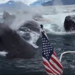 video, adventure, seagull, whales, ocean, footage, filming, discovering, boat, sea, surprise, event, passion,