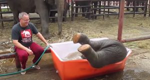 Elephant, Baby, Good Time, Bath, Camp, Water,