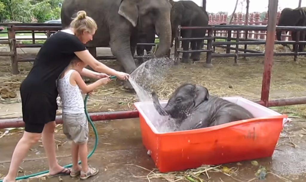 Elephant, Baby, Good Time, Bath, Camp, Water,