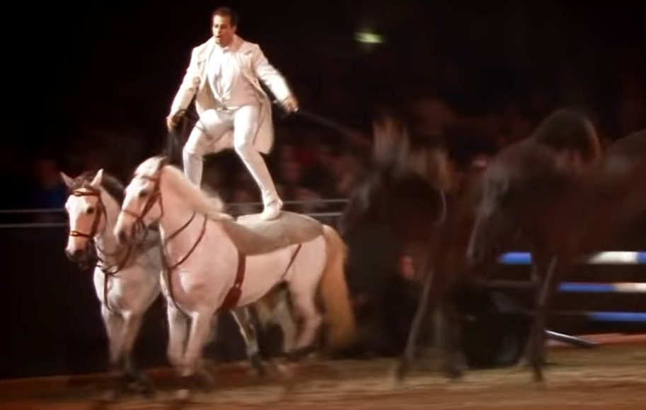 Spectacular, Horses, Show, Talent, Behind Scene, Amazing,