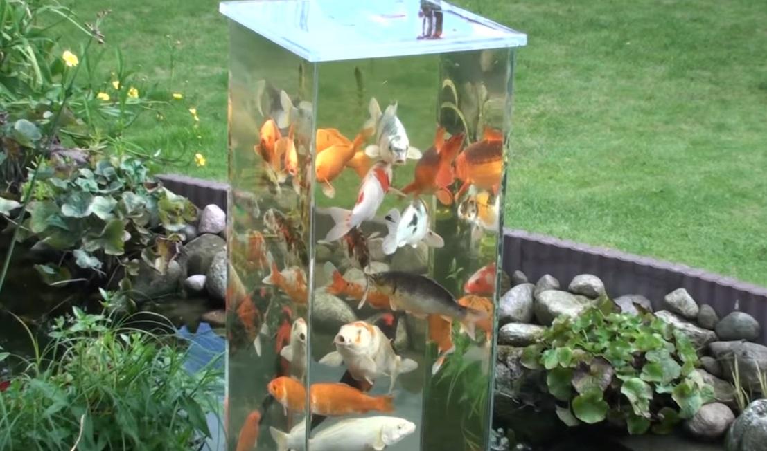 Fish, Tank, Pond, Decor, Backyard, Genius,