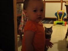 Cat, Daughter, Baby, Adorable, Morning, Hilarious,