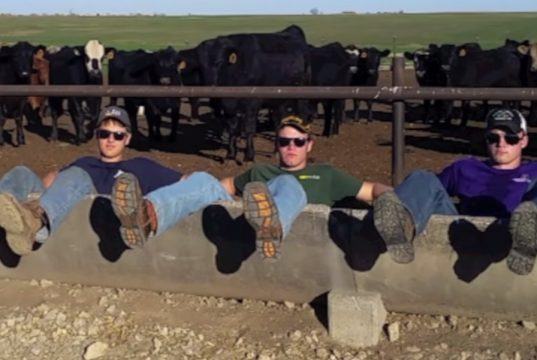Farm, Song, Funny, Brothers, America, Music,