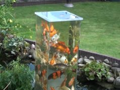 Fish, Tank, Pond, Decor, Backyard, Genius,