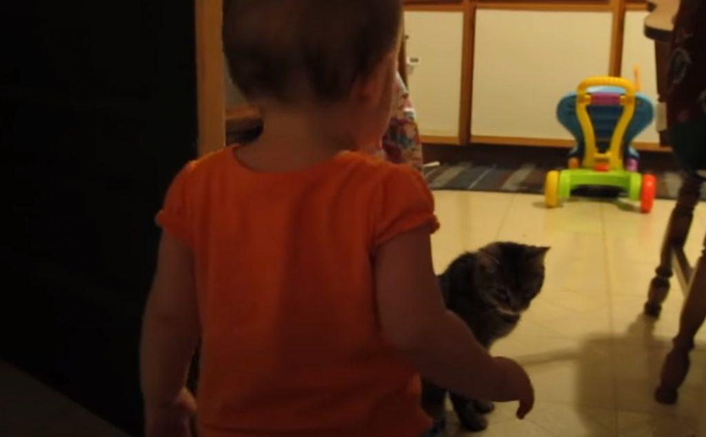 Cat, Daughter, Baby, Adorable, Morning, Hilarious,