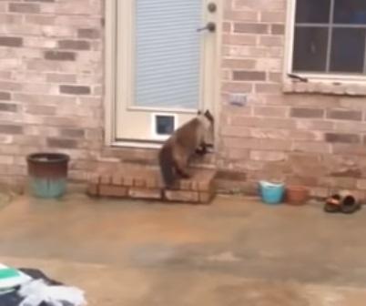Kitty, Cat, Hilarious, Reaction, Door, Building,