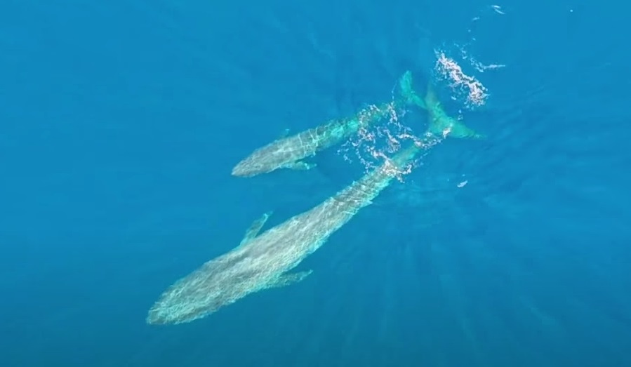 Creature, Animals, Kayaker, Wonderful, largest, Ocean,