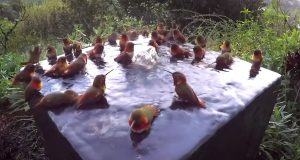 hummingbird, Shower, Morning, Beautiful, Relaxing, Water,
